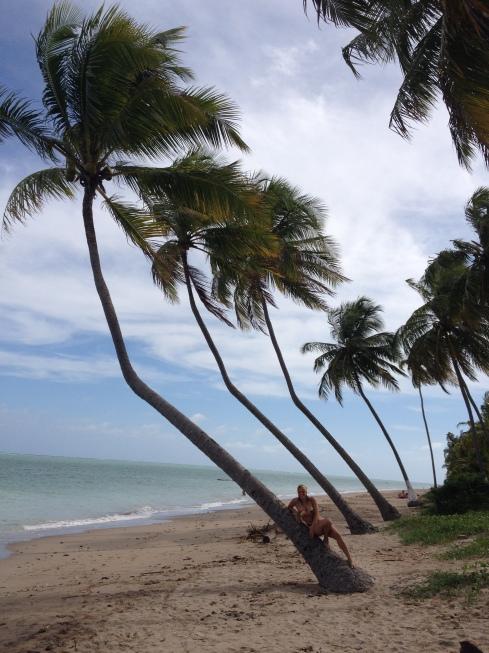alagoas praia do patacho